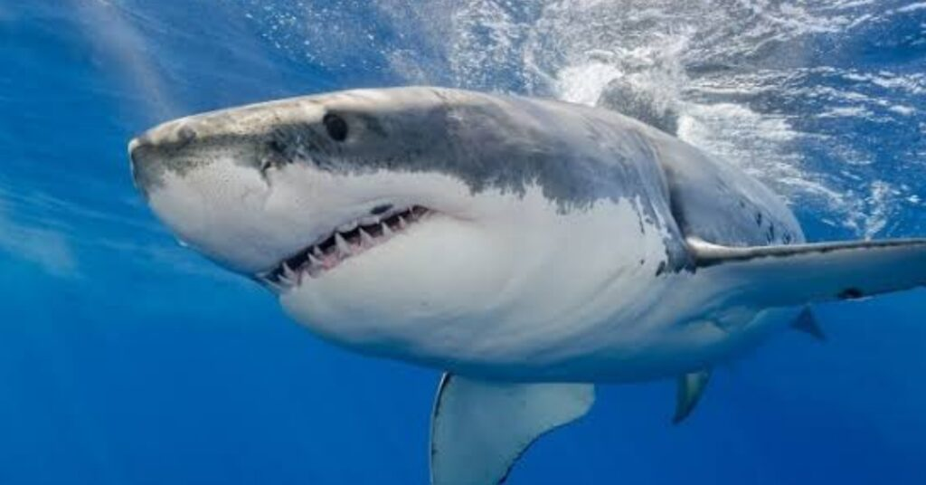 NEWCASTLE COUNCIL SUPPORTS REMOVAL OF SHARK NETS
