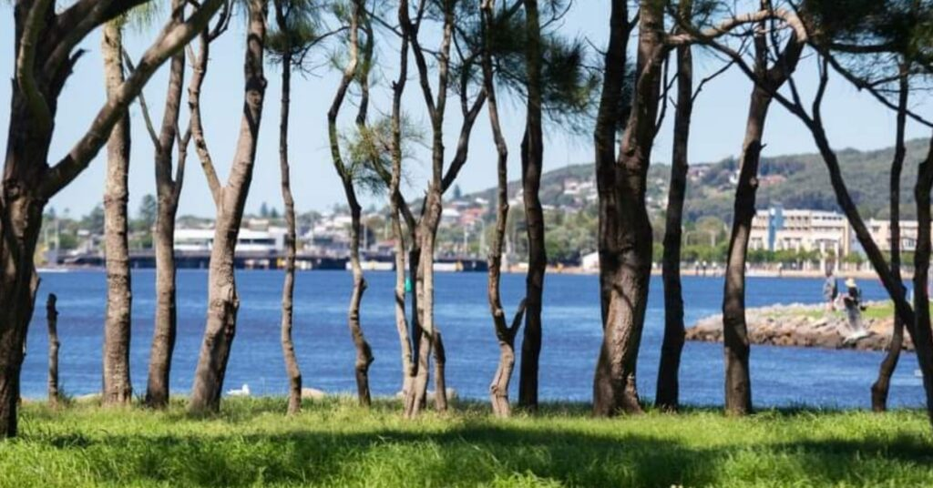 Coon Island, have your say – Lake Macquarie